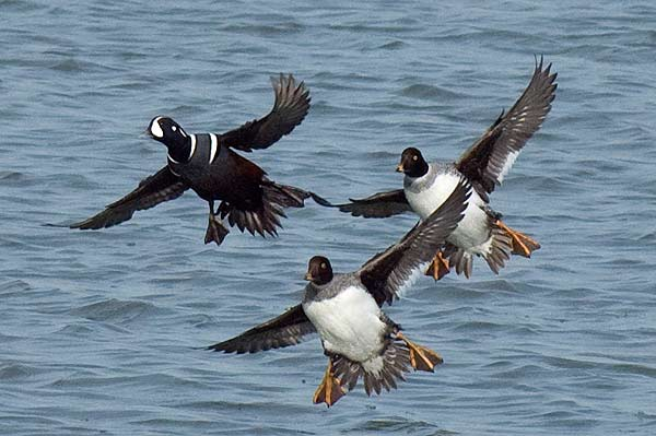 an analysis of the topic of the ducks during the winter A private research university in hoboken, nj, stevens institute of technology  offers undergraduate and graduate programs in the sciences, technology,.